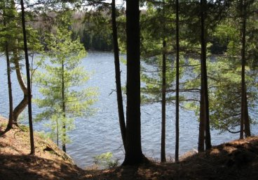 Misty Knoll Trail, Lipsy Lake, Haliburton thumbnail